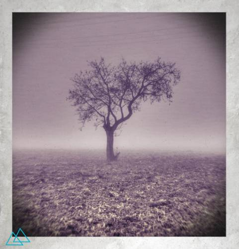 Day#31Tree@Polaroid2